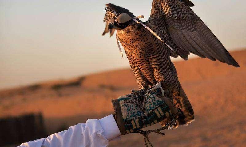 Experience Falconry Dubai
